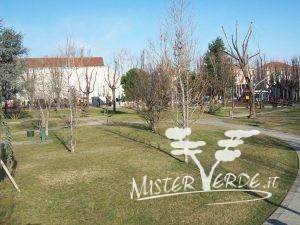 Mister Verde - Progettazione e Realizzazione