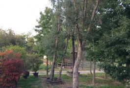 Sughera Quercus Suber
